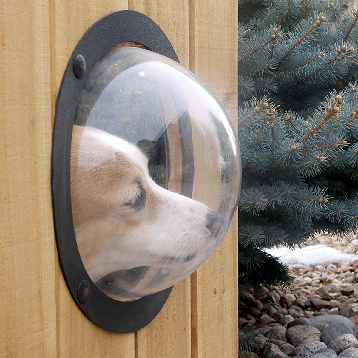 This fence window so your dog can keep tabs on the mail carrier 🐾