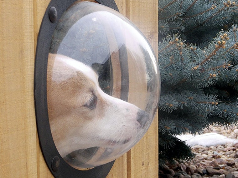 This fence window so your dog can keep tabs on the mail carrier🐾