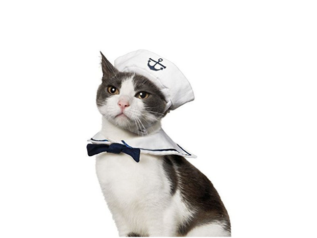 This costume that makes your kitten totally seaworthy