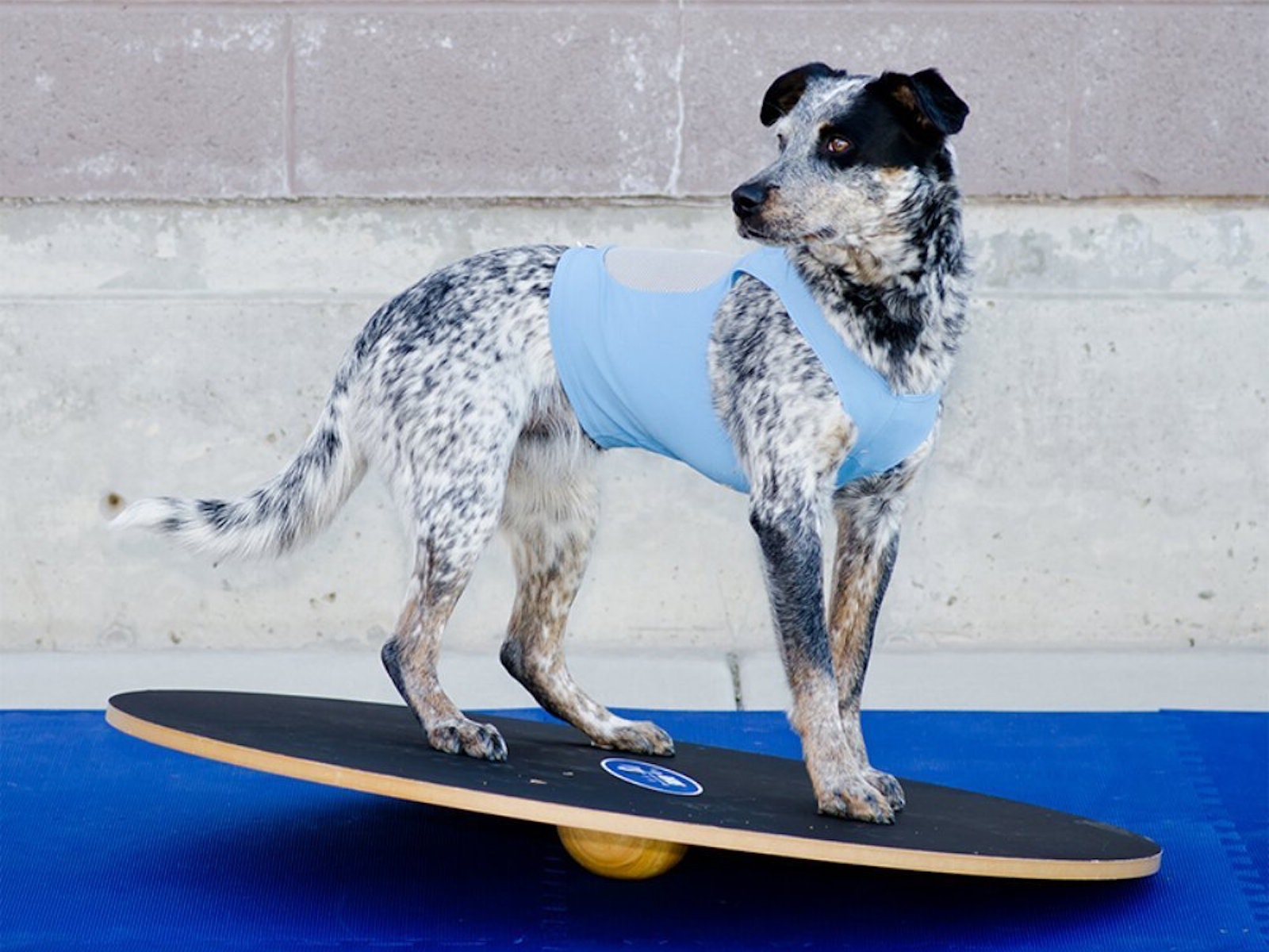This board that'll give your dog a six pack