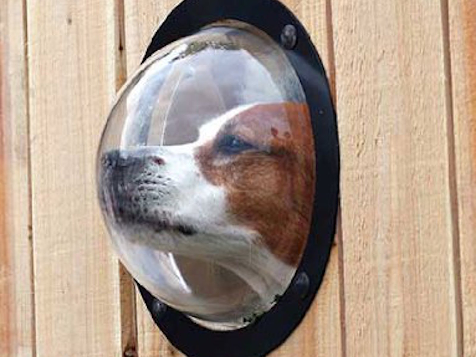 This fence window for your doggo