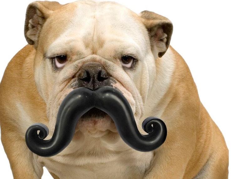 This dandy dog pushbroom