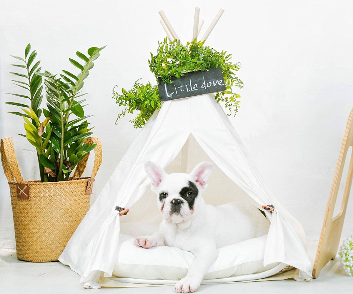 Create a special living space for your pupper