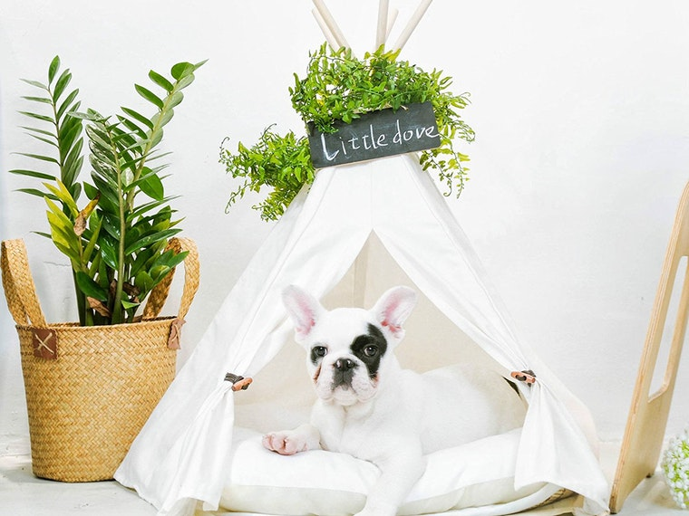 Create a specialliving space for your pupper
