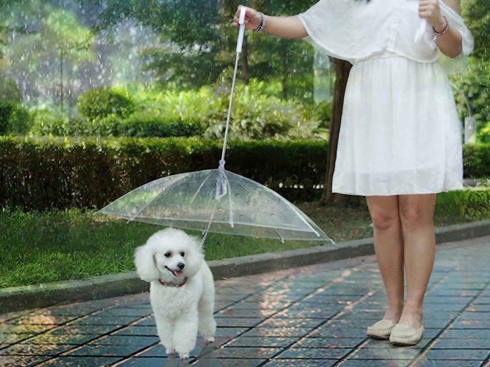 A tiny dog umbrella for staying dry during rainy walks
