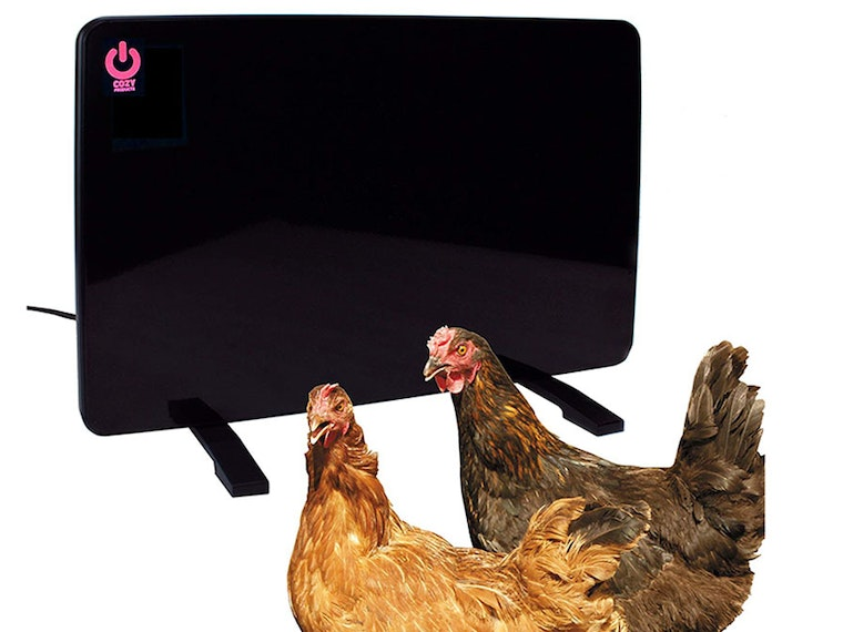This heater to keep your pet chicken nice andwarm 🐔