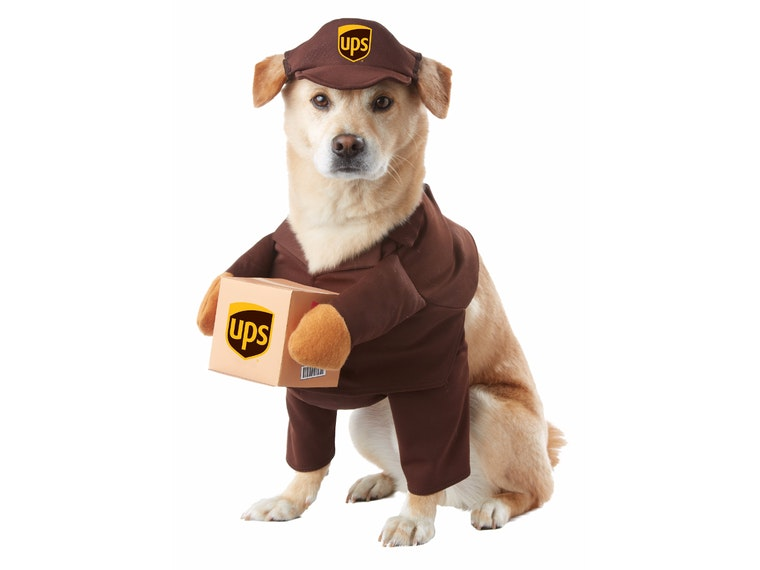 This costume for dogs who won't stop barking at the delivery guy