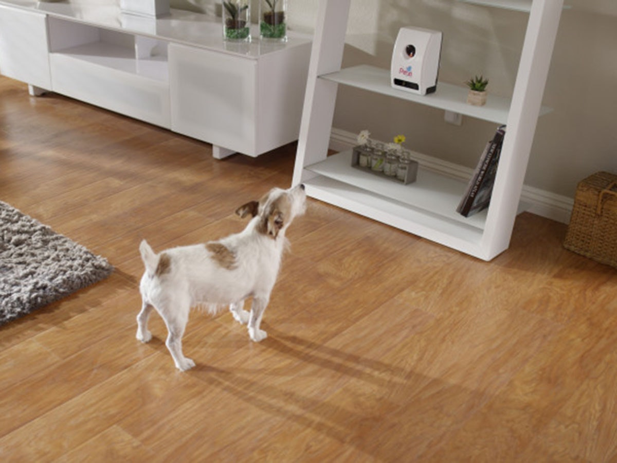 Thisgadget that lets youtreat your doggo no matter where you are