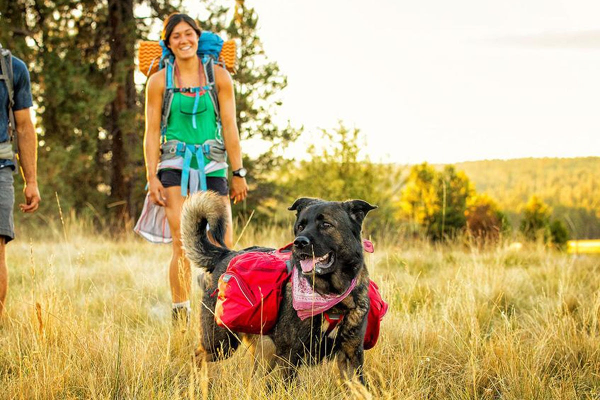 This pack that lets your dog carries their own weight