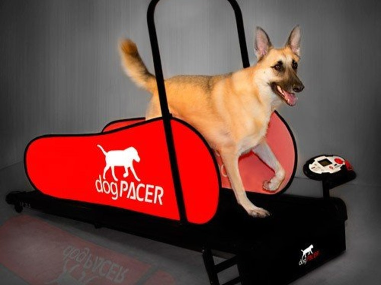 A treadmill to keep your pupper in shape