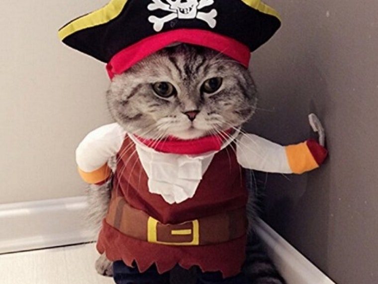This costume your cat will never forgive you for buying (but you should get it anyway)