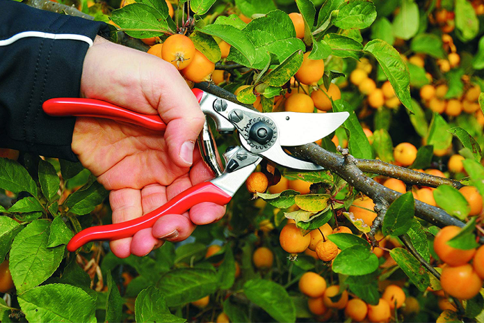 Pruners for those with a green, left thumb 🌳