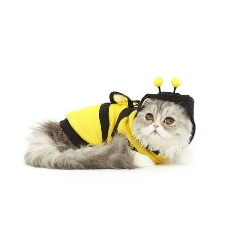 This cat costume for busy bees