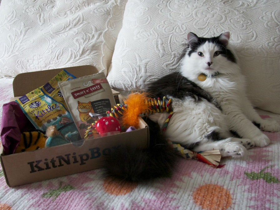 This most purr-fect subscription box for catnip junkies