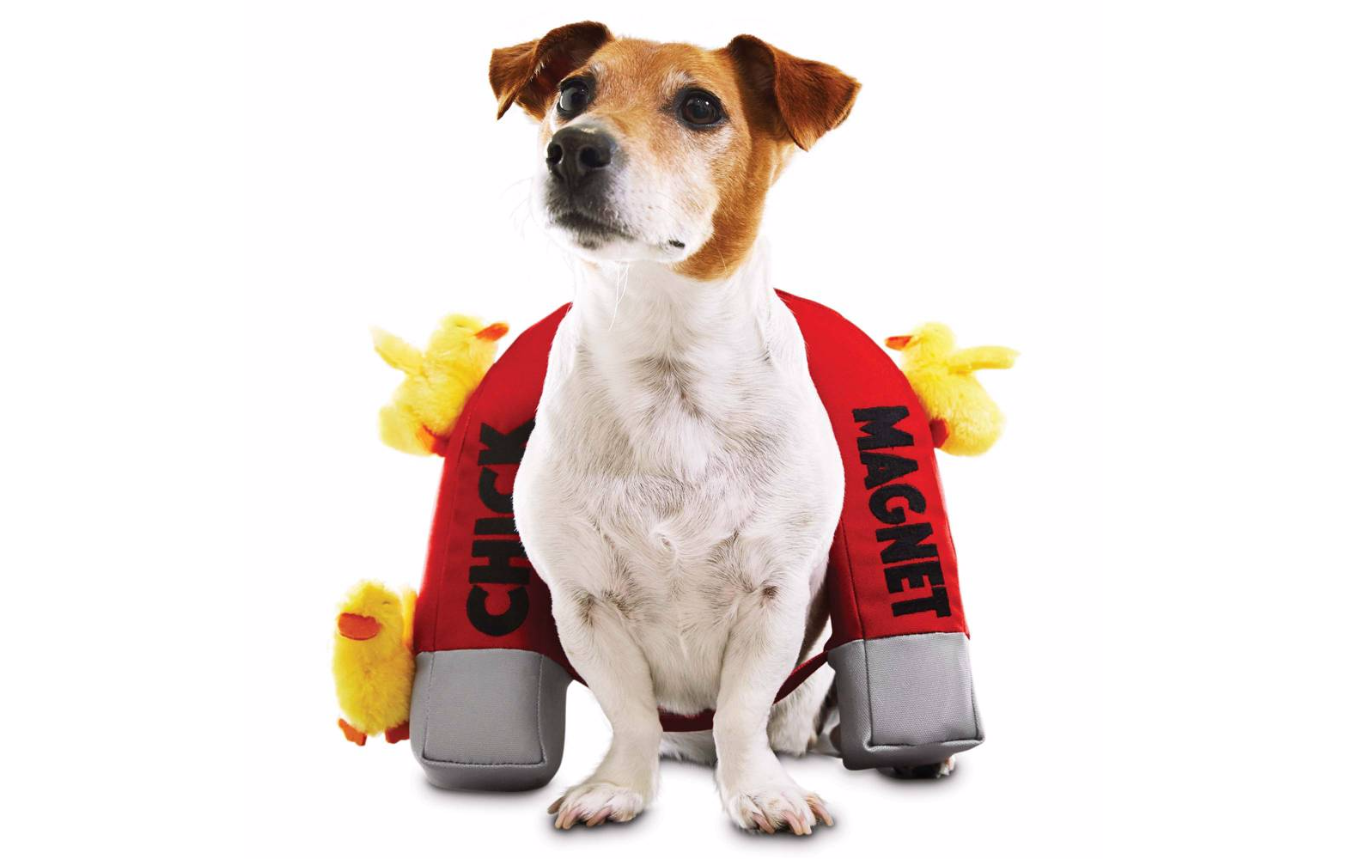 Thiscostume for dogs that love the ladies