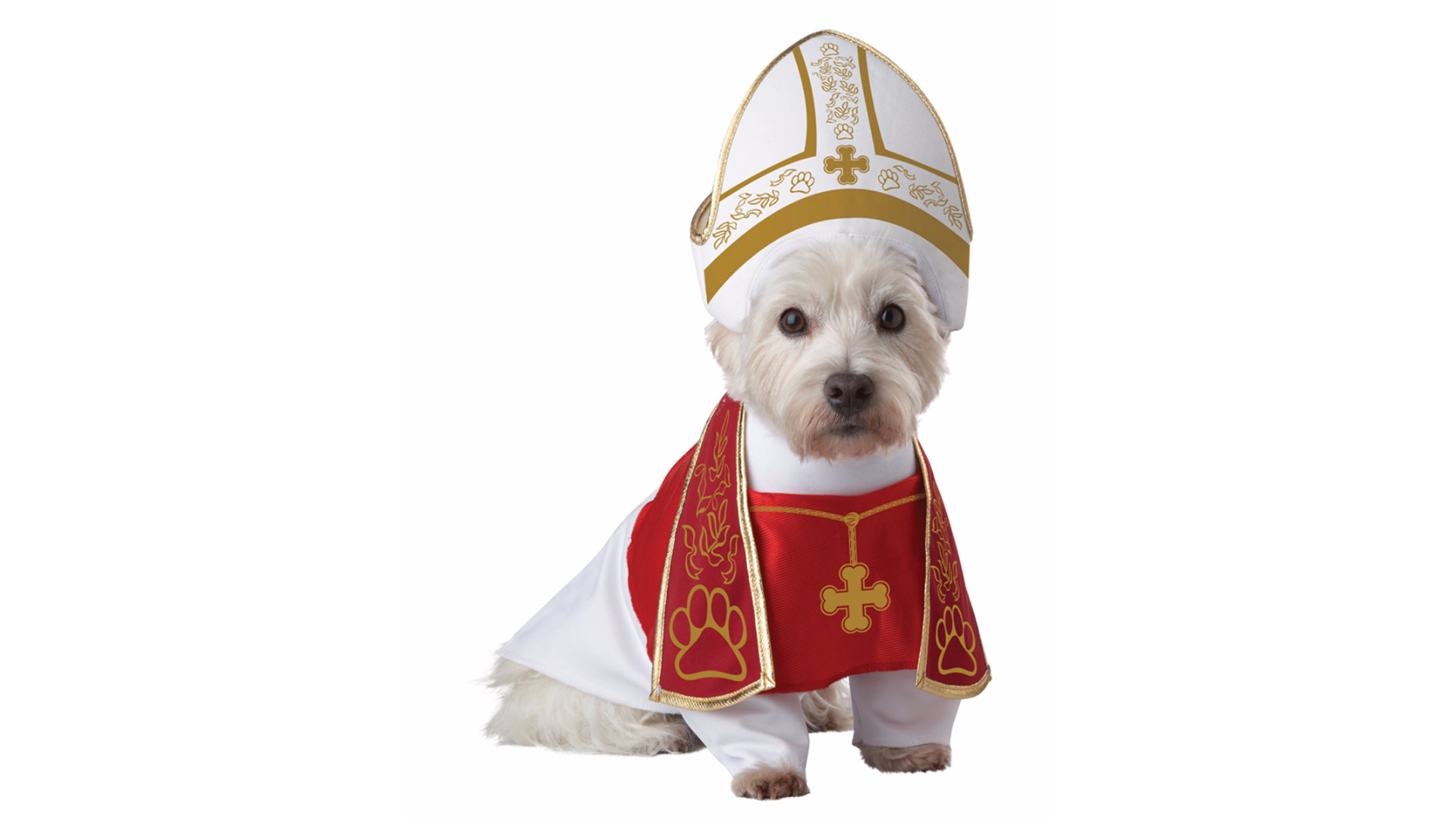 This most divinecostume for a very good boy