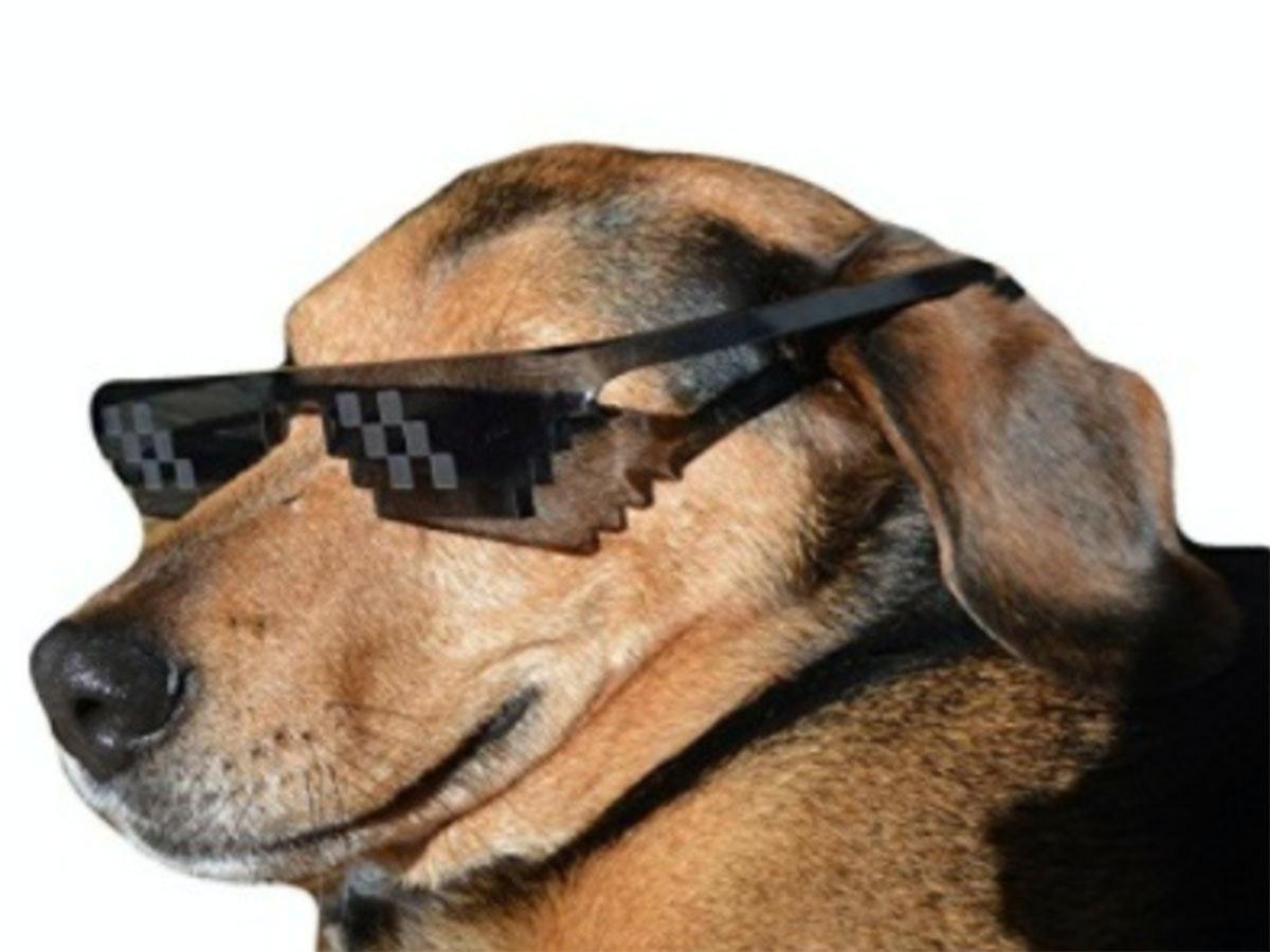 These meme-savvy sunglasses that scream