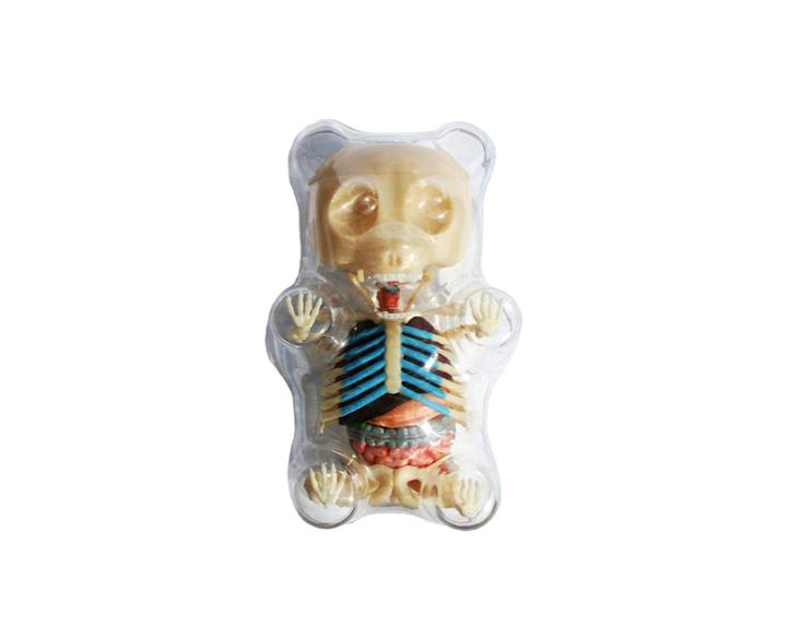 This terrifying look at gummy bear anatomy