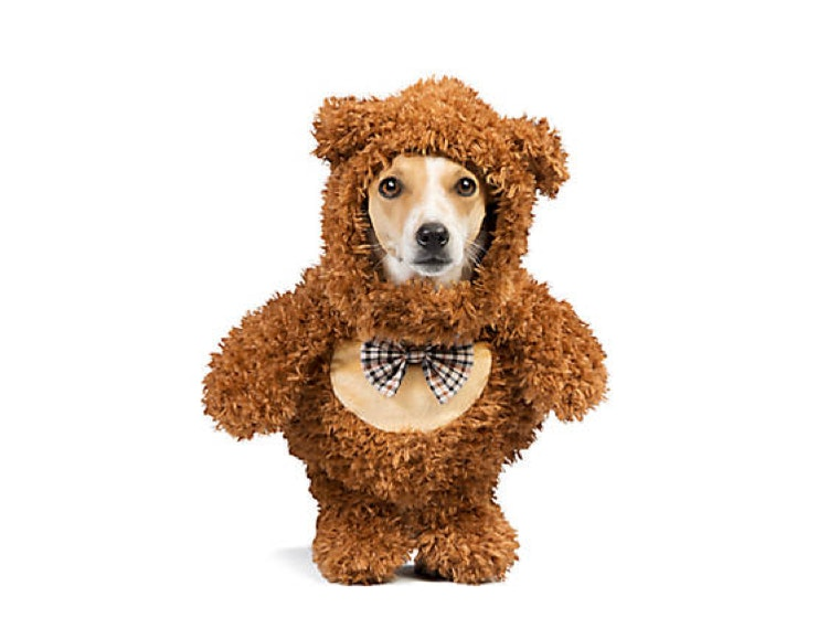 A super cuddly costume
