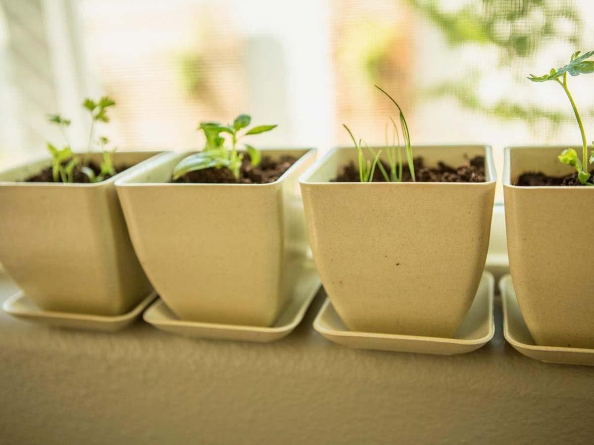 Plant an herb garden🌱