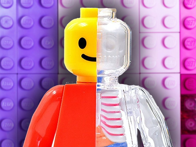 This amazing anatomical model of a Lego minifig