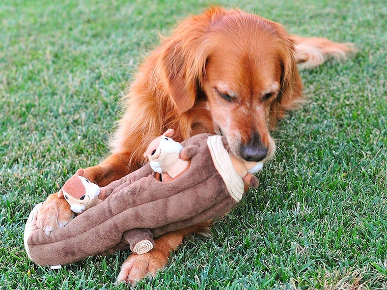 This hide-and-squeak dog toy🐾