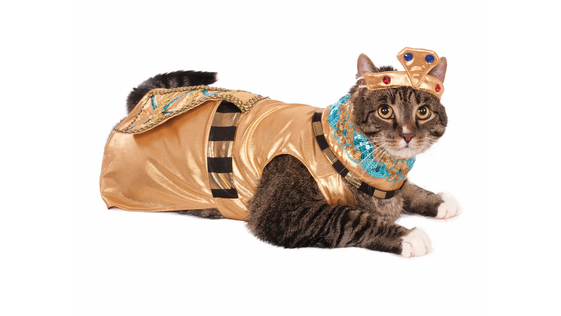 This costume fit for kitty royalty