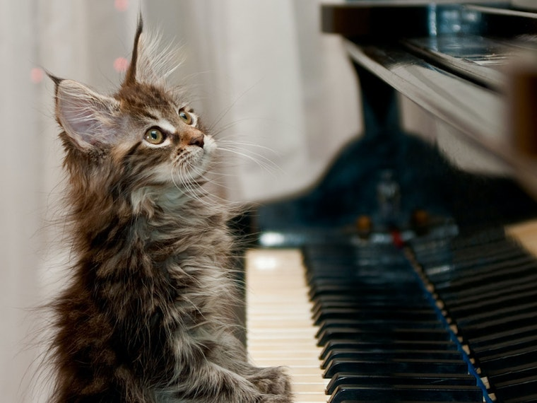 A DVD-R of a cat playing piano🎹🐈