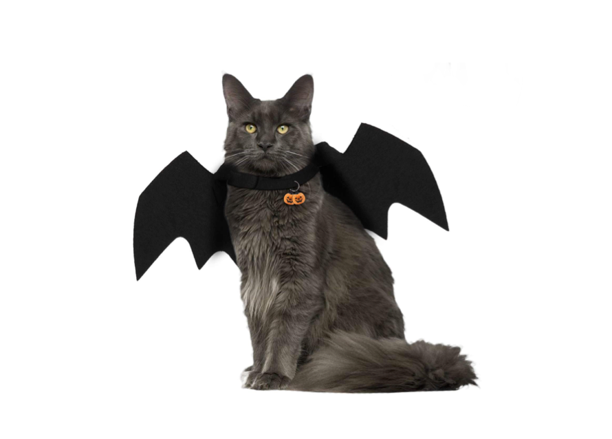 These sassy wings for subtle kitties