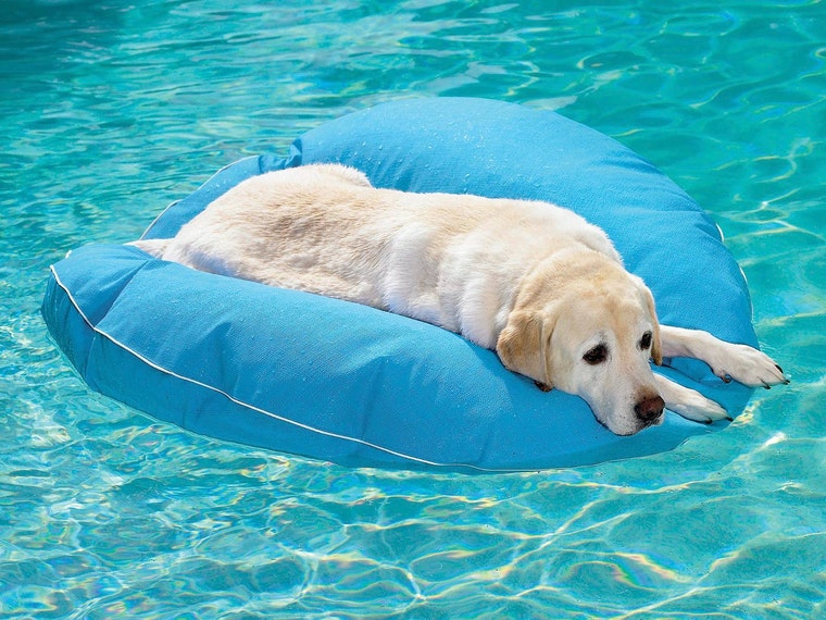 This rugged pool float for your pupper