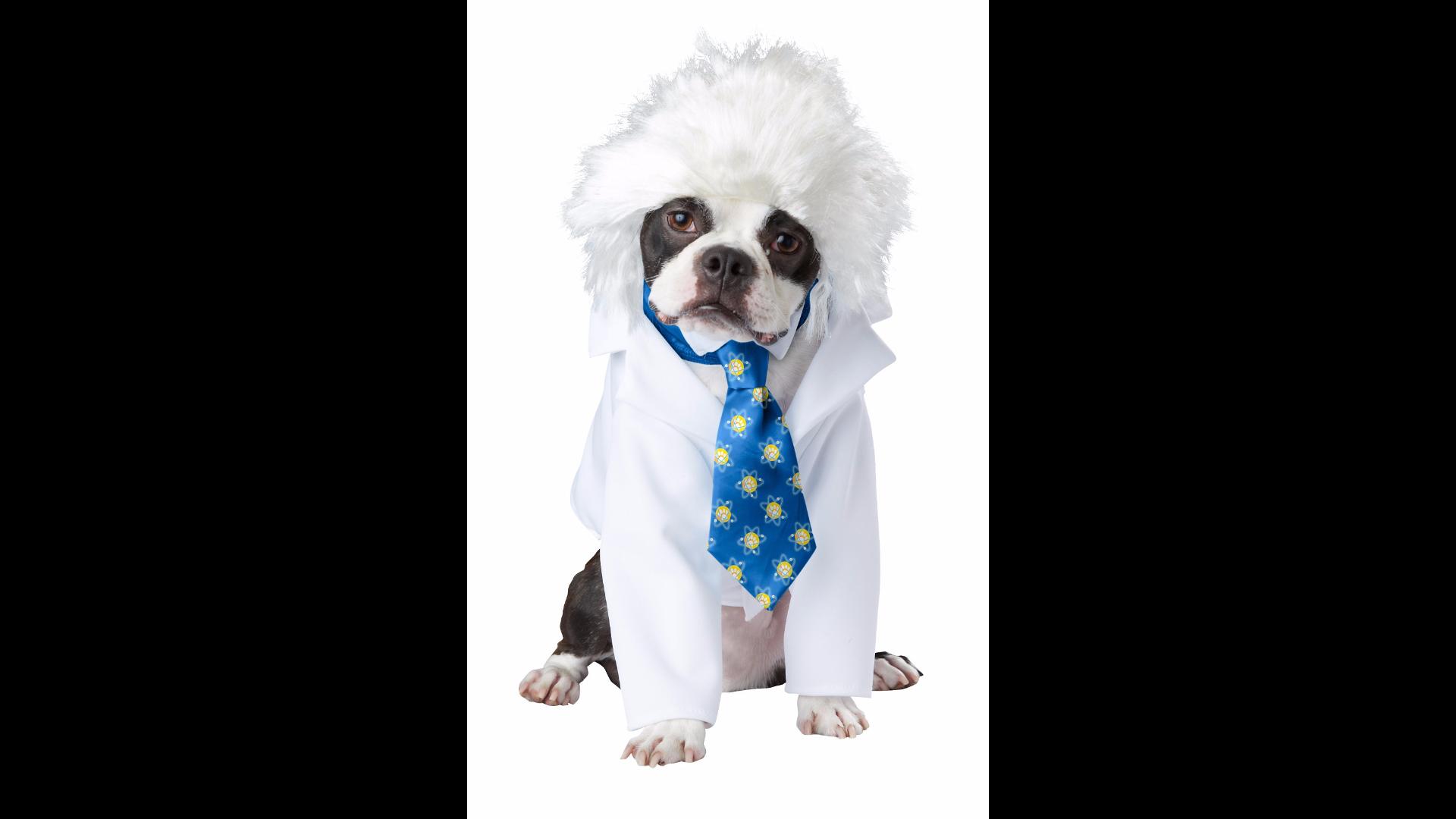 This genius Einstein costume for the thinking dog