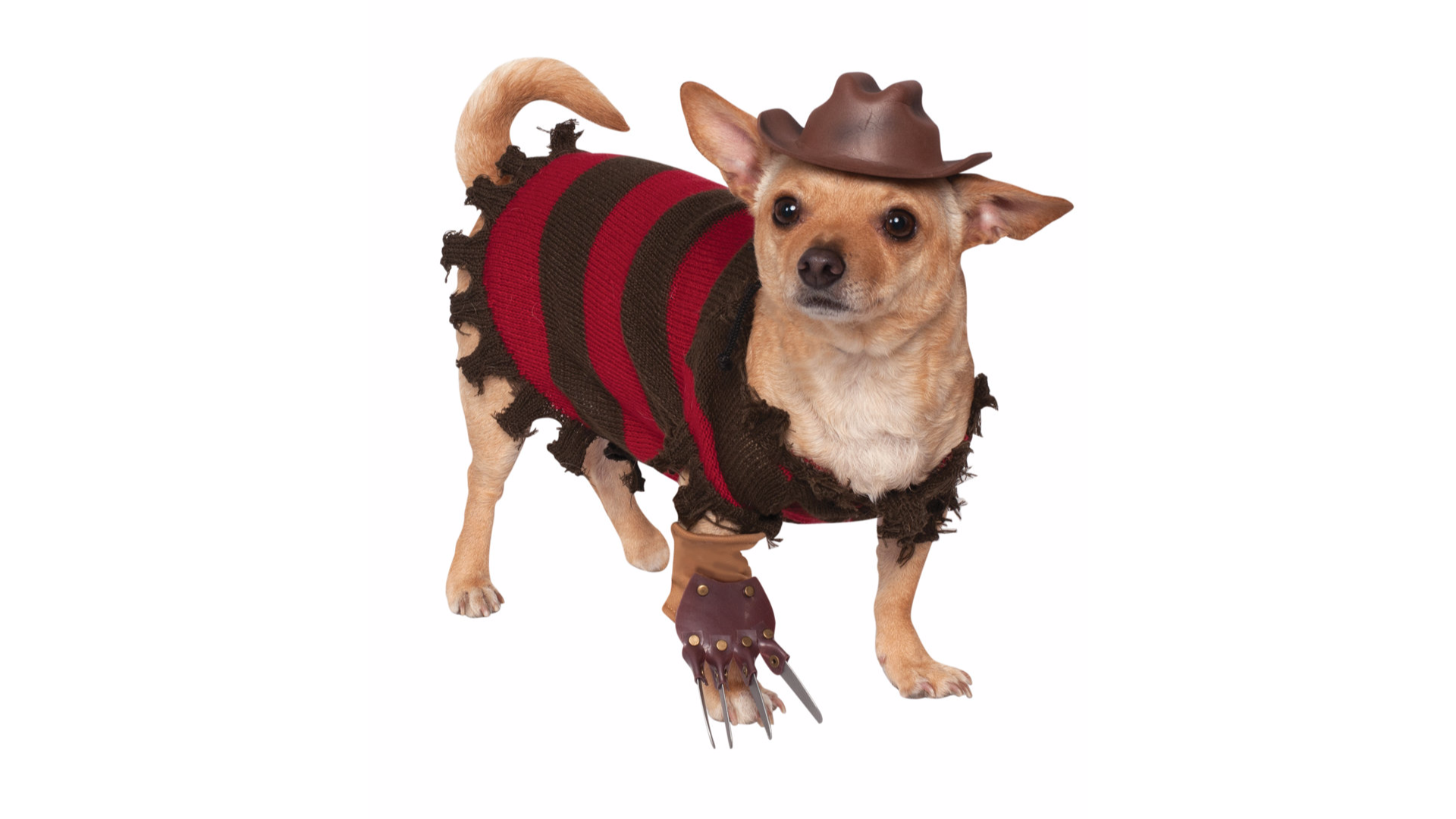 This cuddly nightmare of a costume