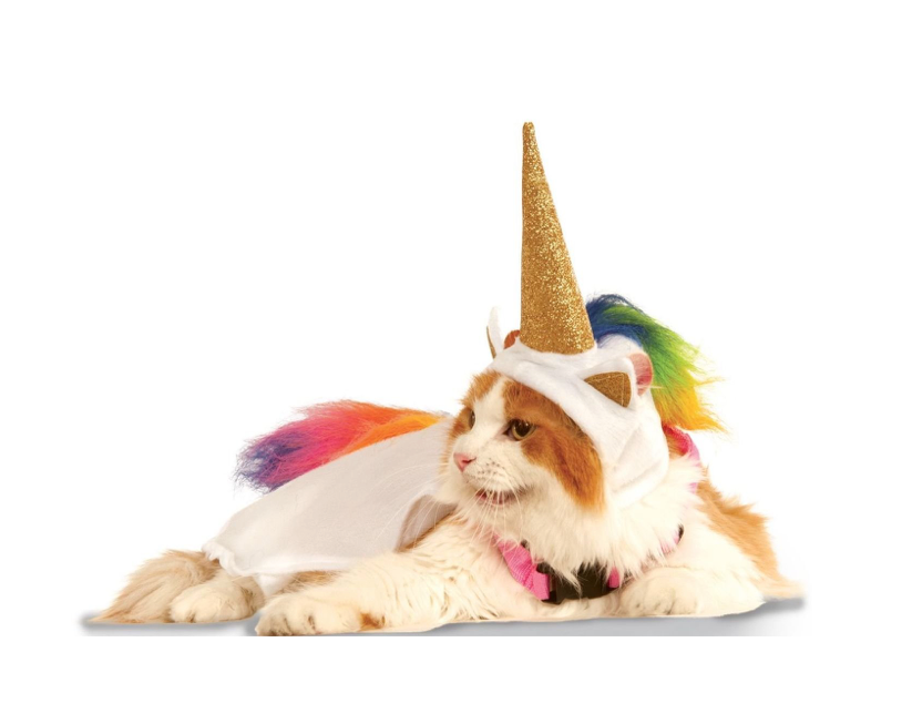 The perfect costume for your cat