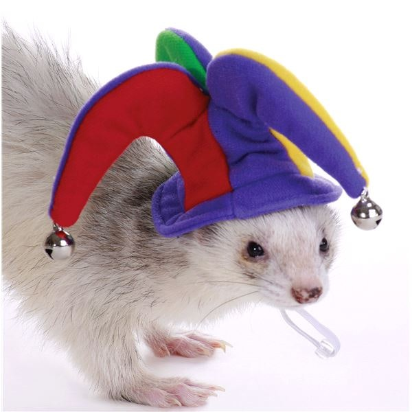This fun hat for your ferret friends