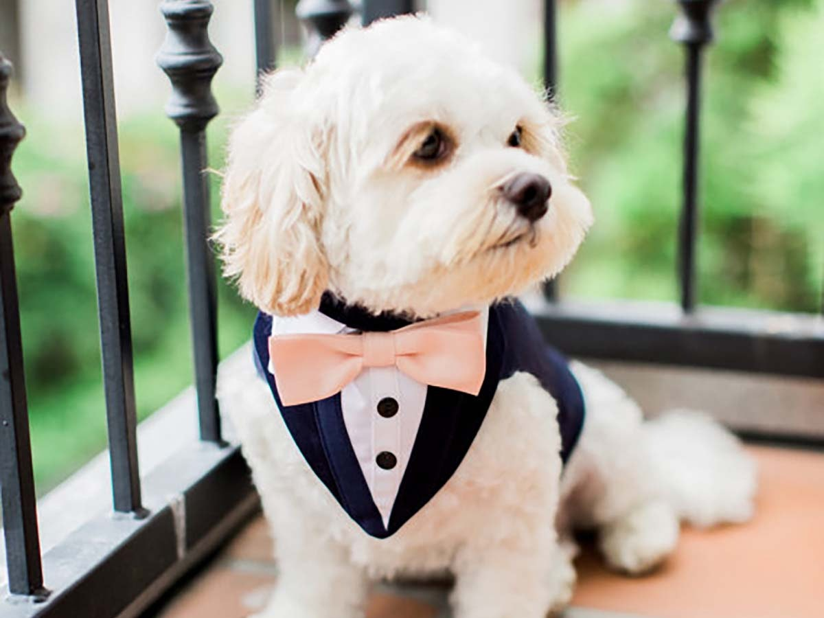 Theseclassy outfits for yourfour-legged guests