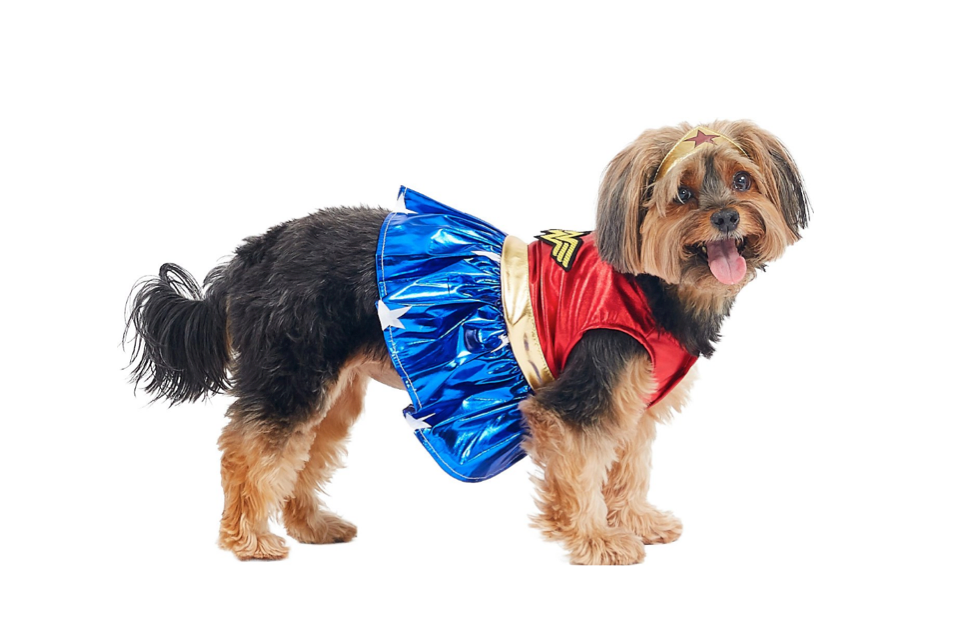 This wonderful costume for dogs that don't need saving