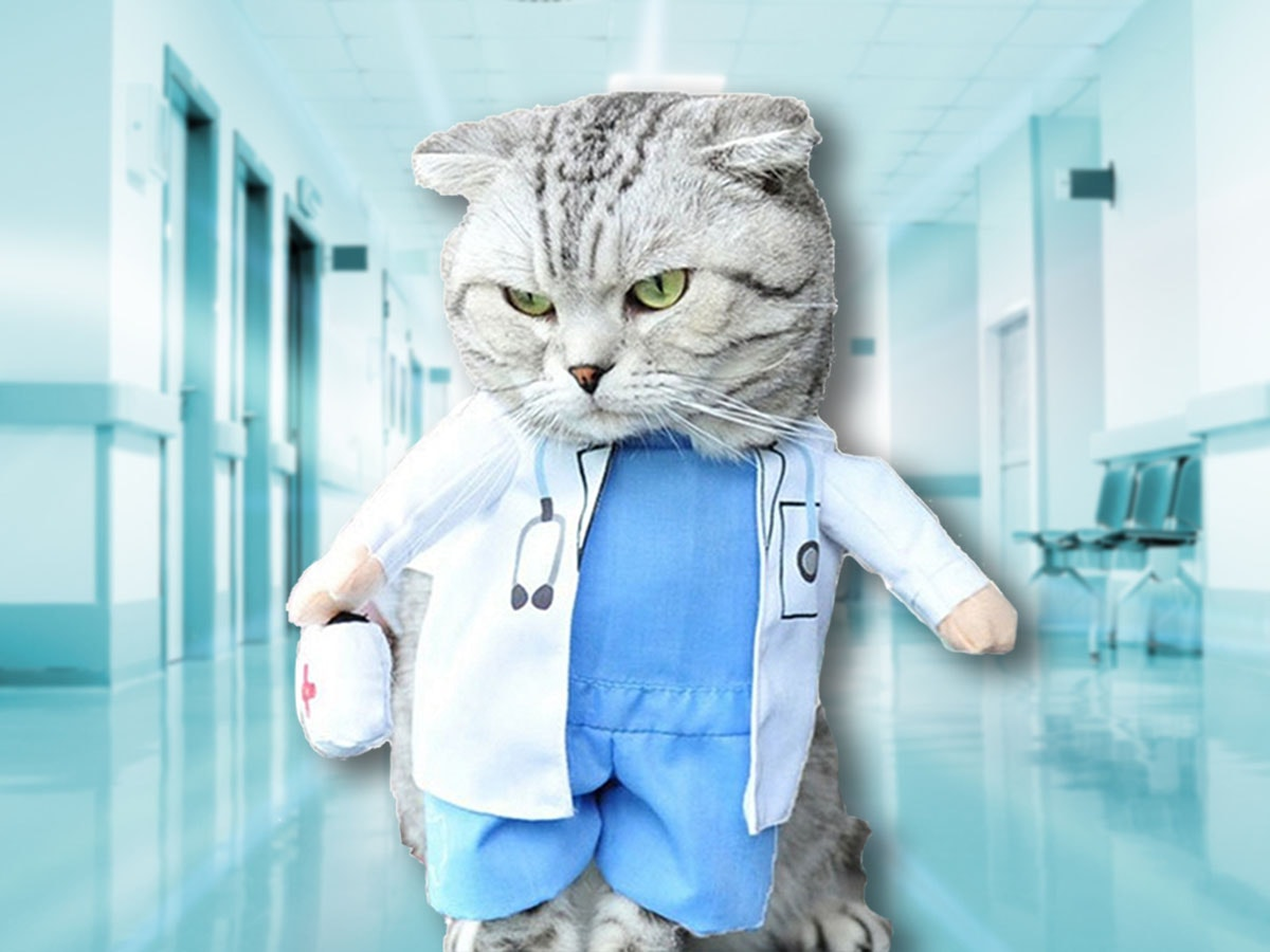 This costume that turns your cat into a qualified medical professional