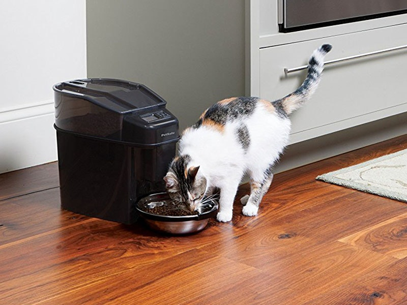 This pet-proof auto feeder that stops kibble thieves cold