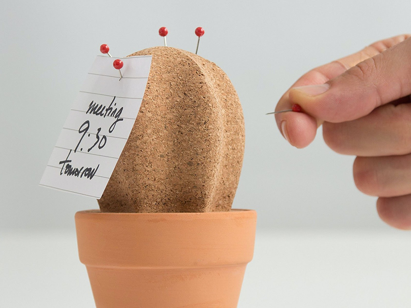 A prick-free cork cactus... with a secret