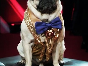 Doug The Pug and Justin Bieber Have Today's Top Instagram Photos