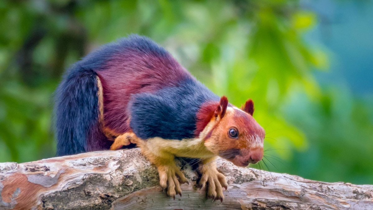 Cute Alert: You've Got to See These Massive Multi-Colored Squirrels