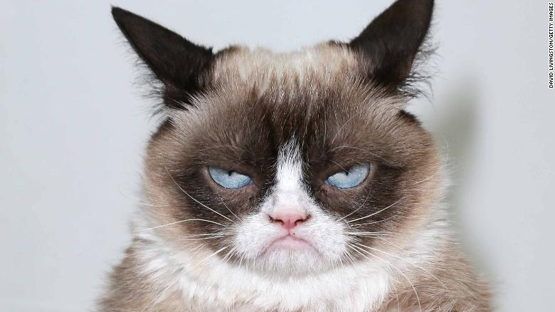 RIP Grumpy Cat: The Internet Star Has Died at Age 7
