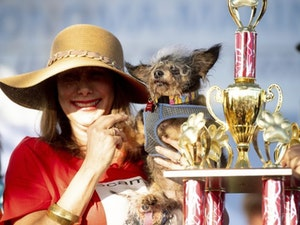 Scamp the Tramp Wins World's Ugliest Dog Contest: See the Pics!